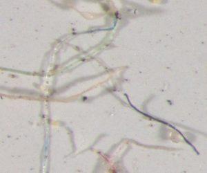 下塑膠雨 落磯山脈、科羅拉多州雨水含有塑膠微粒