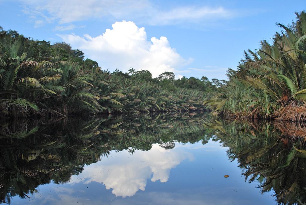 暖化有助植物生長? 研究:缺水會抵消「全球綠化」效果
