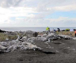 火山噴發六年後 西之島上發現海鳥繁殖新生態系誕生