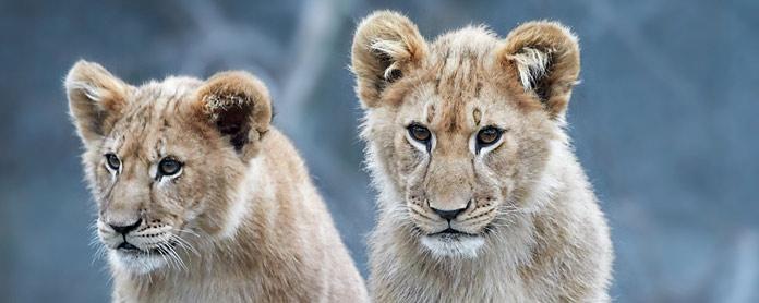 南非旅遊新規 禁止人與野生動物互動 業主正反聲浪四起